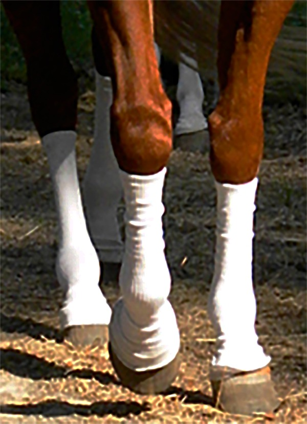silver whinny's socks being worn on a horse